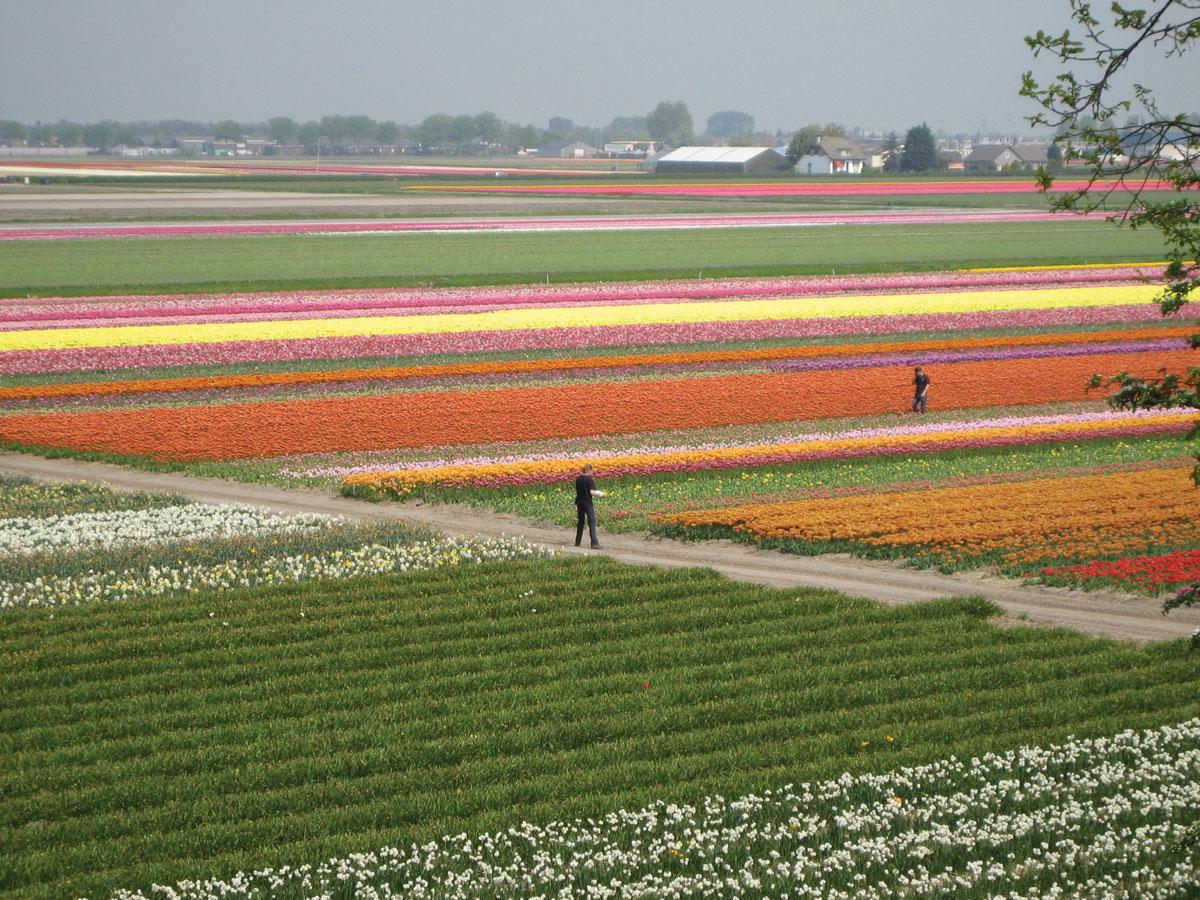 Paesaggio-olandese-