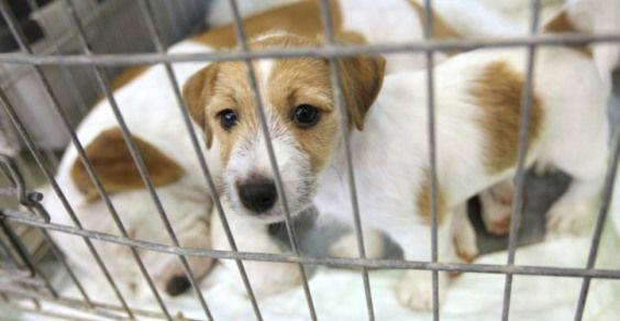 """Reati contro gli animali non vengono """"depenalizzati"""""""