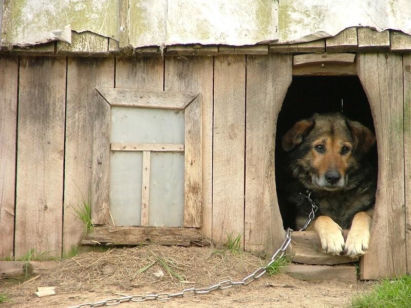 Reati contro gli animali. Interviene la Lav
