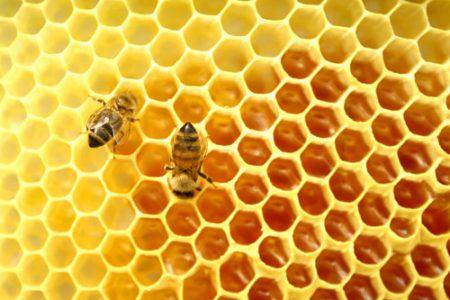 sagra del miele