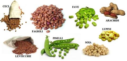 vari tipi di legumi