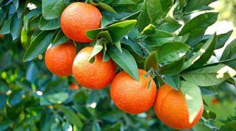 arance confagricoltura